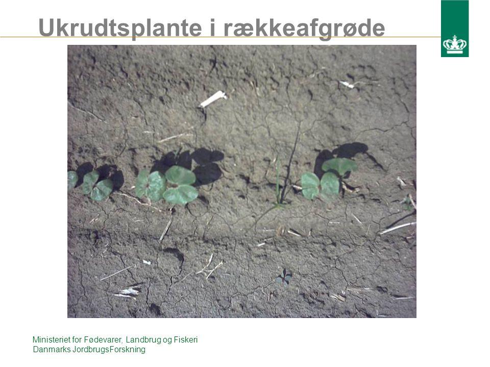 Ukrudtsplante i rækkeafgrøde Ministeriet for Fødevarer, Landbrug og Fiskeri Danmarks JordbrugsForskning