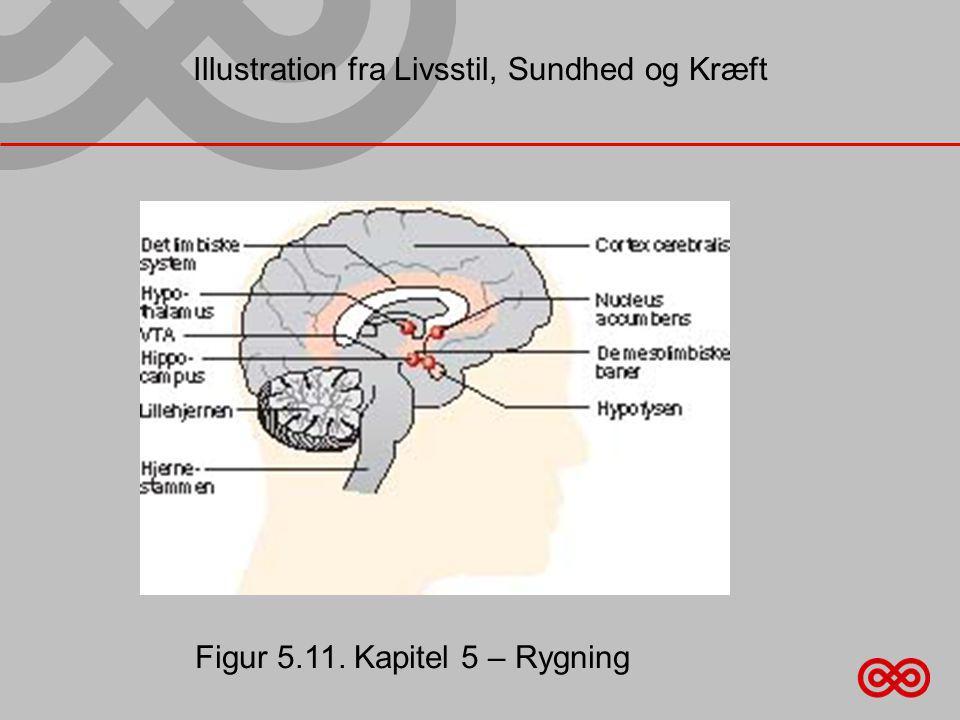 Illustration fra Livsstil, Sundhed og Kræft Figur 5.11. Kapitel 5 – Rygning