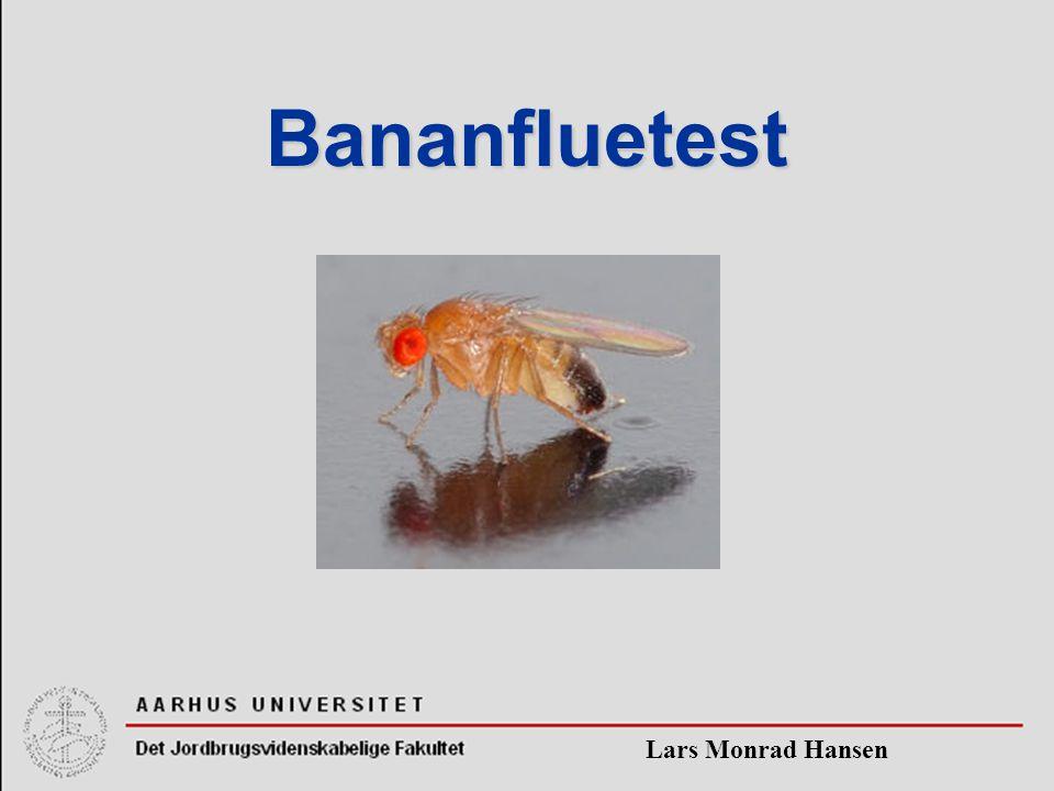 Lars Monrad Hansen Bananfluetest