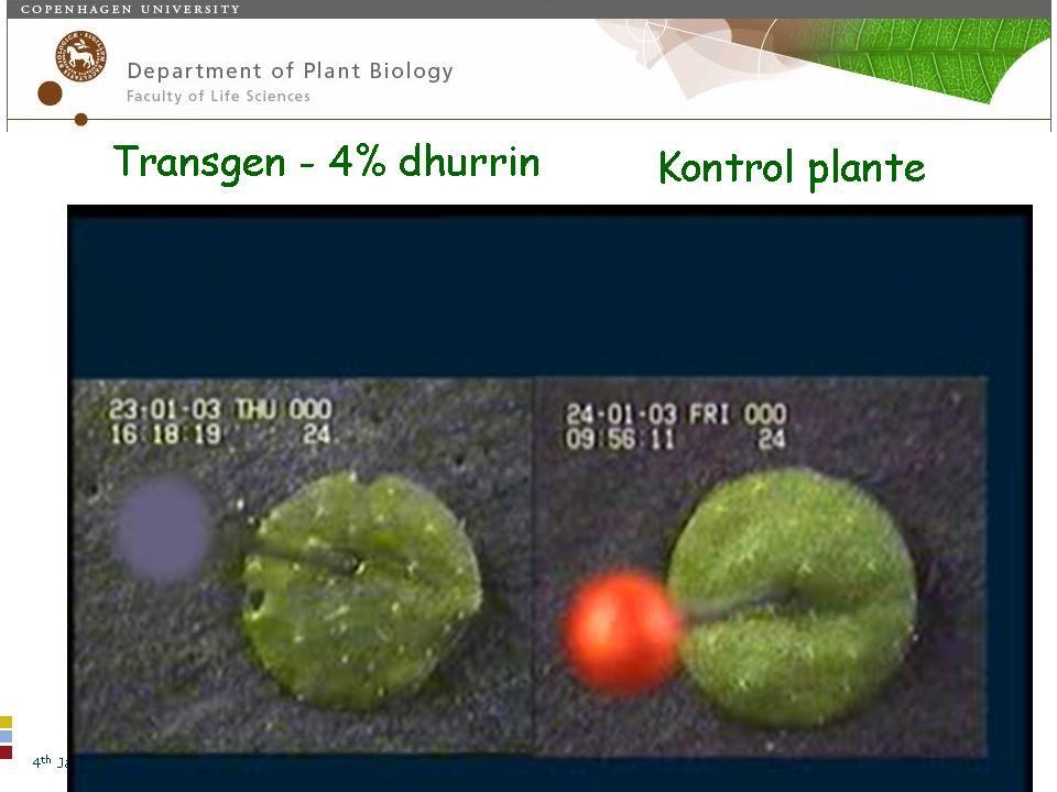 4 th January 2007 – © Søren Bak Plantebiokemisk laboratorium