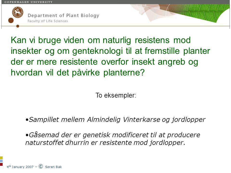 4 th January 2007 – © Søren Bak Plantebiokemisk laboratorium Kan vi bruge viden om naturlig resistens mod insekter og om genteknologi til at fremstille planter der er mere resistente overfor insekt angreb og hvordan vil det påvirke planterne.