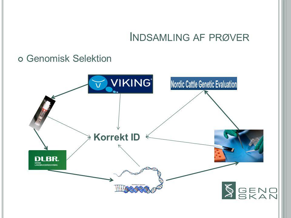 I NDSAMLING AF PRØVER Genomisk Selektion Korrekt ID