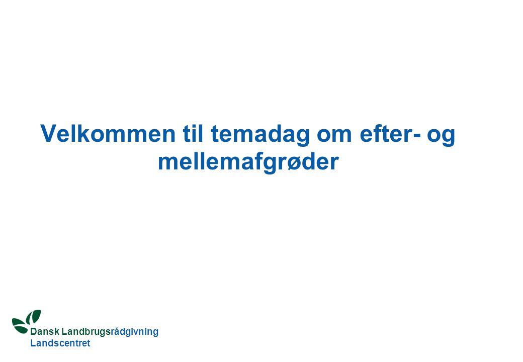 Dansk Landbrugsrådgivning Landscentret Velkommen til temadag om efter- og mellemafgrøder
