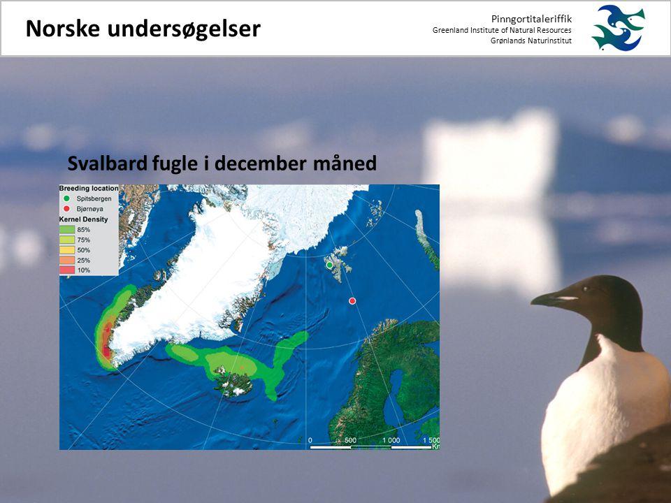 Pinngortitaleriffik Greenland Institute of Natural Resources Grønlands Naturinstitut Norske undersøgelser Svalbard fugle i december måned