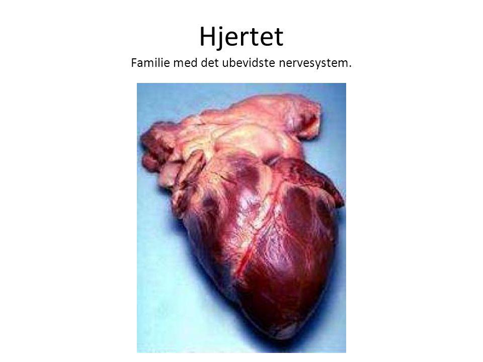 Hjertet Familie med det ubevidste nervesystem.
