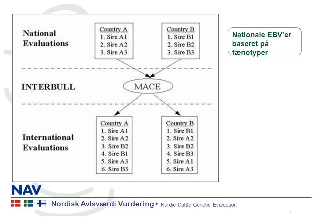 Nordisk Avlsværdi Vurdering Nordic Cattle Genetic Evaluation 4 Nationale EBV'er baseret på fænotyper