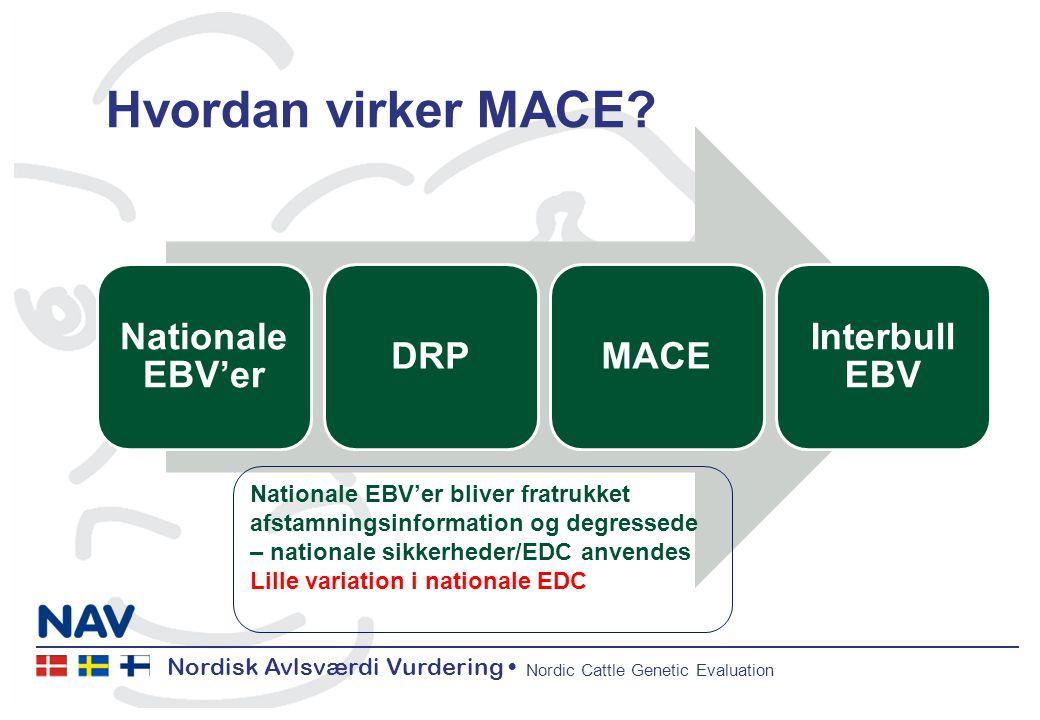 Nordisk Avlsværdi Vurdering Nordic Cattle Genetic Evaluation Hvordan virker MACE.