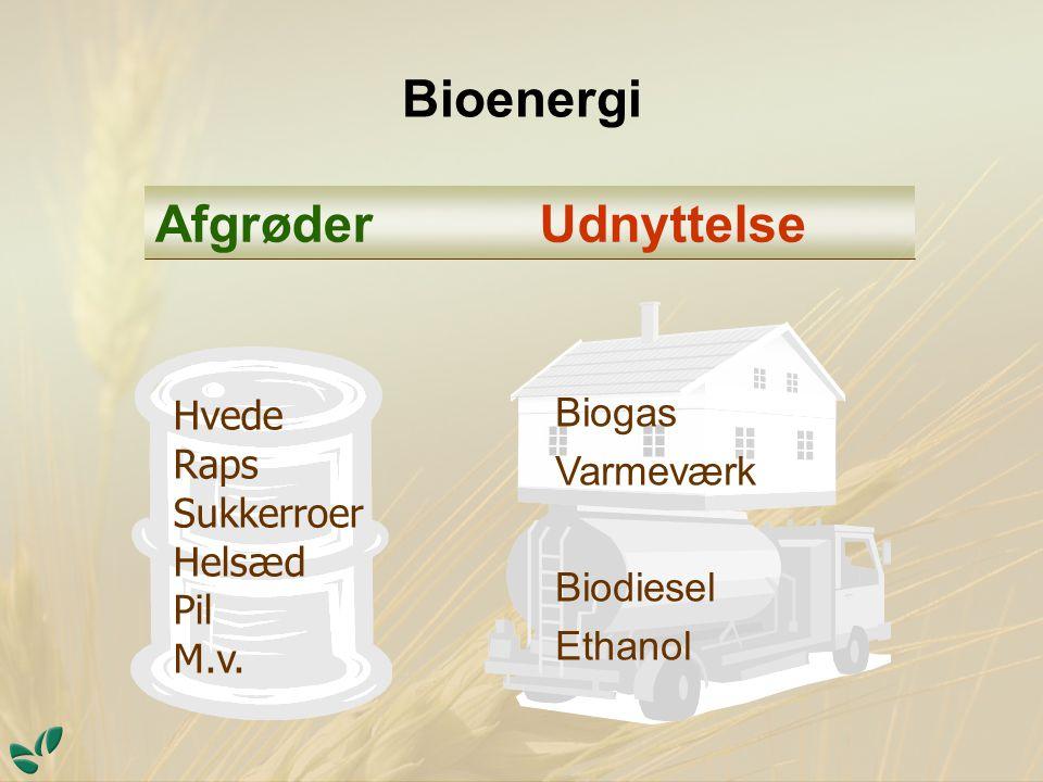 Bioenergi Biogas Varmeværk Biodiesel Ethanol UdnyttelseAfgrøder Hvede Raps Sukkerroer Helsæd Pil M.v.