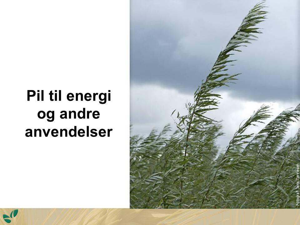 Pil til energi og andre anvendelser Fotograf: Jens Tønnesen