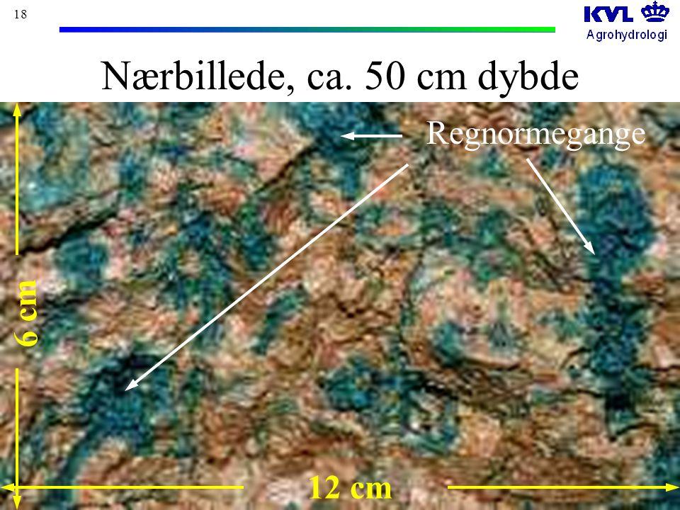18 Nærbillede, ca. 50 cm dybde 12 cm 6 cm Regnormegange