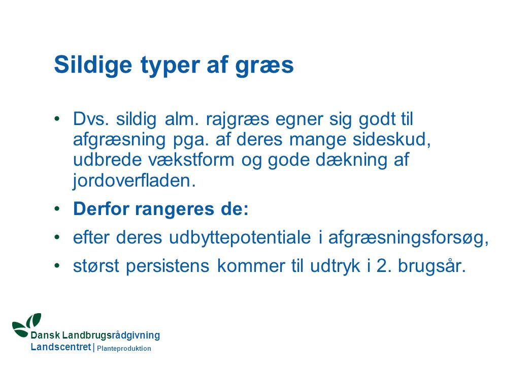 Dansk Landbrugsrådgivning Landscentret | Planteproduktion Sildige typer af græs Dvs.