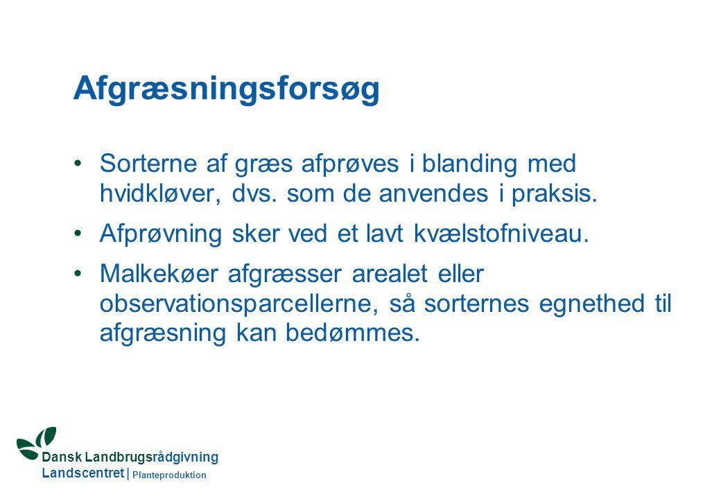 Dansk Landbrugsrådgivning Landscentret | Planteproduktion Afgræsningsforsøg Sorterne af græs afprøves i blanding med hvidkløver, dvs.