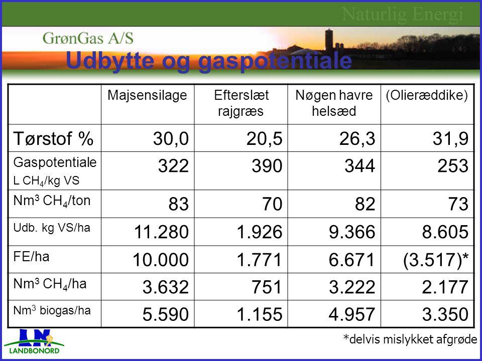 Udbytte og gaspotentiale MajsensilageEfterslæt rajgræs Nøgen havre helsæd (Olieræddike) Tørstof %30,020,526,331,9 Gaspotentiale L CH 4 /kg VS 322390344253 Nm 3 CH 4 /ton 83708273 Udb.