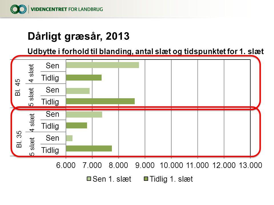 Dårligt græsår, 2013 Udbytte i forhold til blanding, antal slæt og tidspunktet for 1.