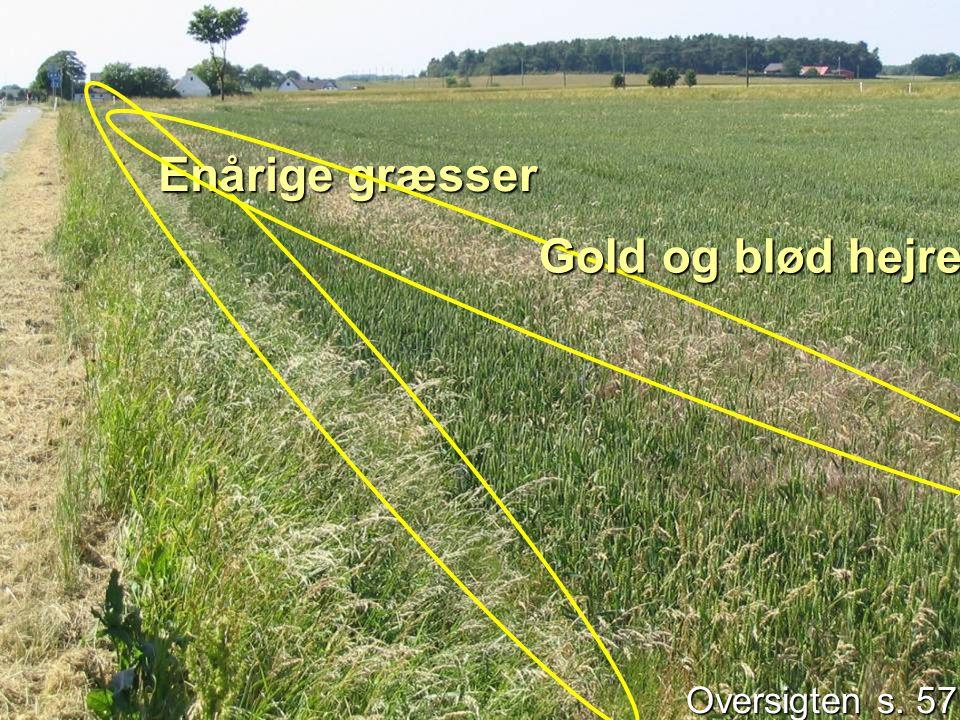 Oversigten s. 57 Enårige græsser Gold og blød hejre