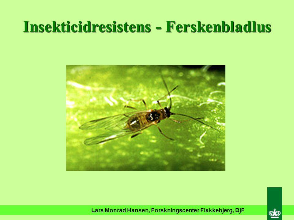 Eksempler på insekticidresistens I Danmark på friland Ferskenbladlus Glimmerbøsser