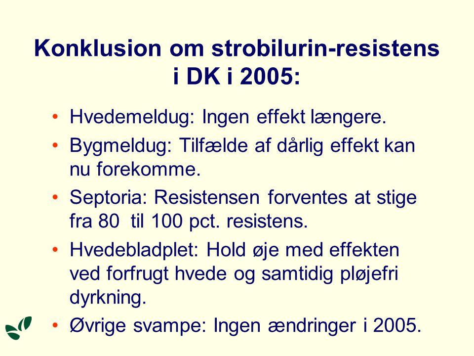 Konklusion om strobilurin-resistens i DK i 2005: Hvedemeldug: Ingen effekt længere.