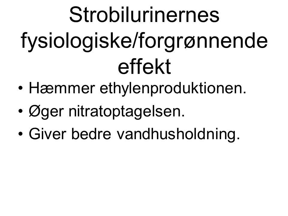 Strobilurinernes fysiologiske/forgrønnende effekt Hæmmer ethylenproduktionen.