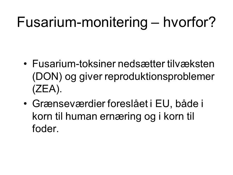 Fusarium-monitering – hvorfor.
