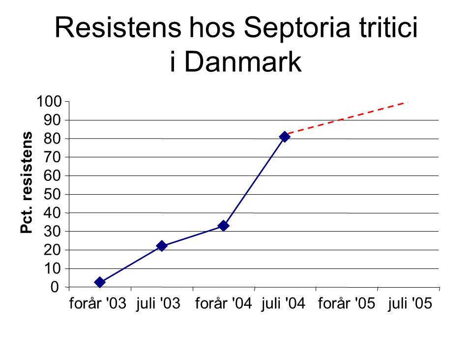 Resistens hos Septoria tritici i Danmark 0 10 20 30 40 50 60 70 80 90 100 forår 03juli 03forår 04juli 04forår 05juli 05 Pct.