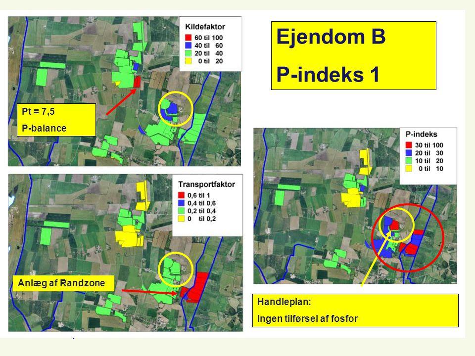 Planteproduktion Ejendom B P-indeks 1 Pt = 7,5 P-balance Anlæg af Randzone Handleplan: Ingen tilførsel af fosfor