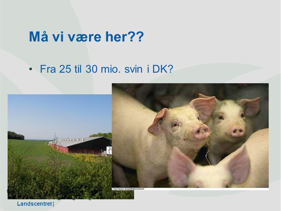 Dansk Landbrugsrådgivning Landscentret | Må vi være her Fra 25 til 30 mio. svin i DK