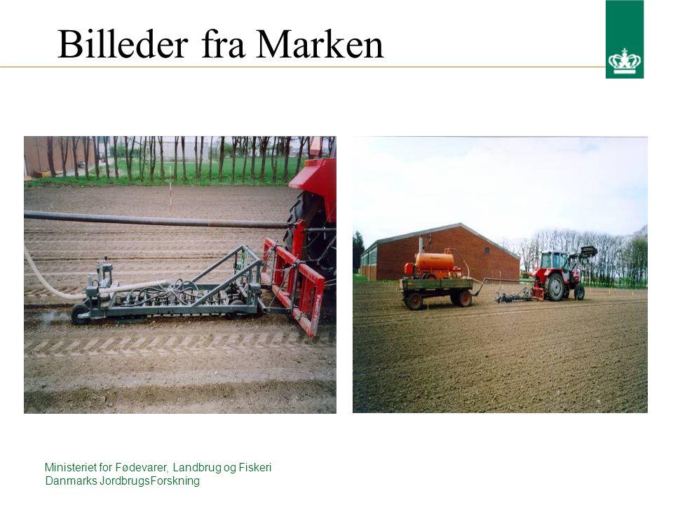 Ministeriet for Fødevarer, Landbrug og Fiskeri Danmarks JordbrugsForskning Billeder fra Marken