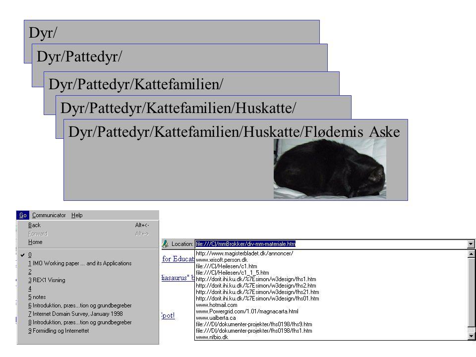 Dyr/ Dyr/Pattedyr/ Dyr/Pattedyr/Kattefamilien/ Dyr/Pattedyr/Kattefamilien/Huskatte/ Dyr/Pattedyr/Kattefamilien/Huskatte/Flødemis Aske