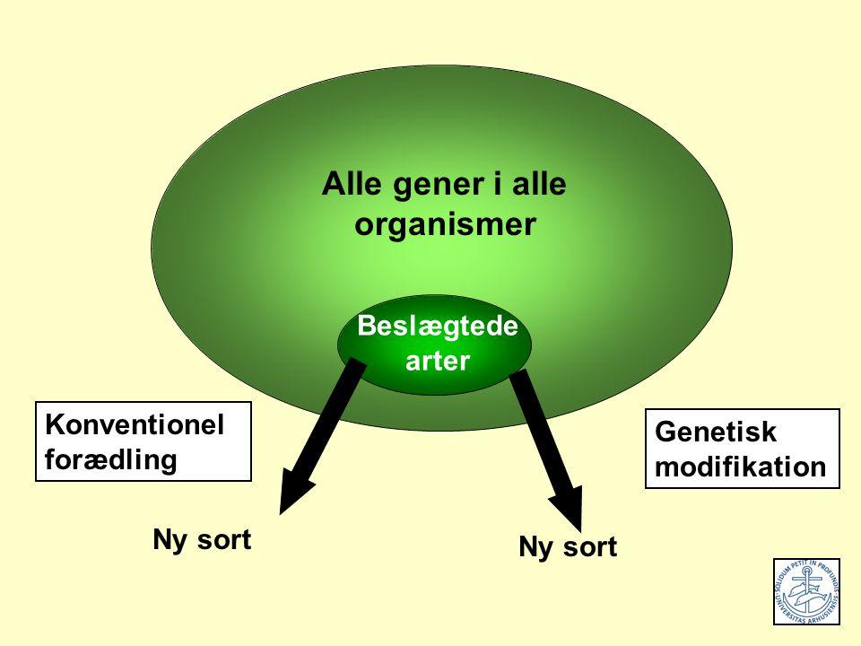 Beslægtede arter Alle gener i alle organismer Genetisk modifikation Ny sort Konventionel forædling