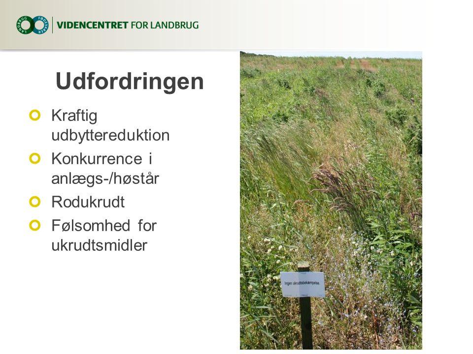 Udfordringen Kraftig udbyttereduktion Konkurrence i anlægs-/høstår Rodukrudt Følsomhed for ukrudtsmidler