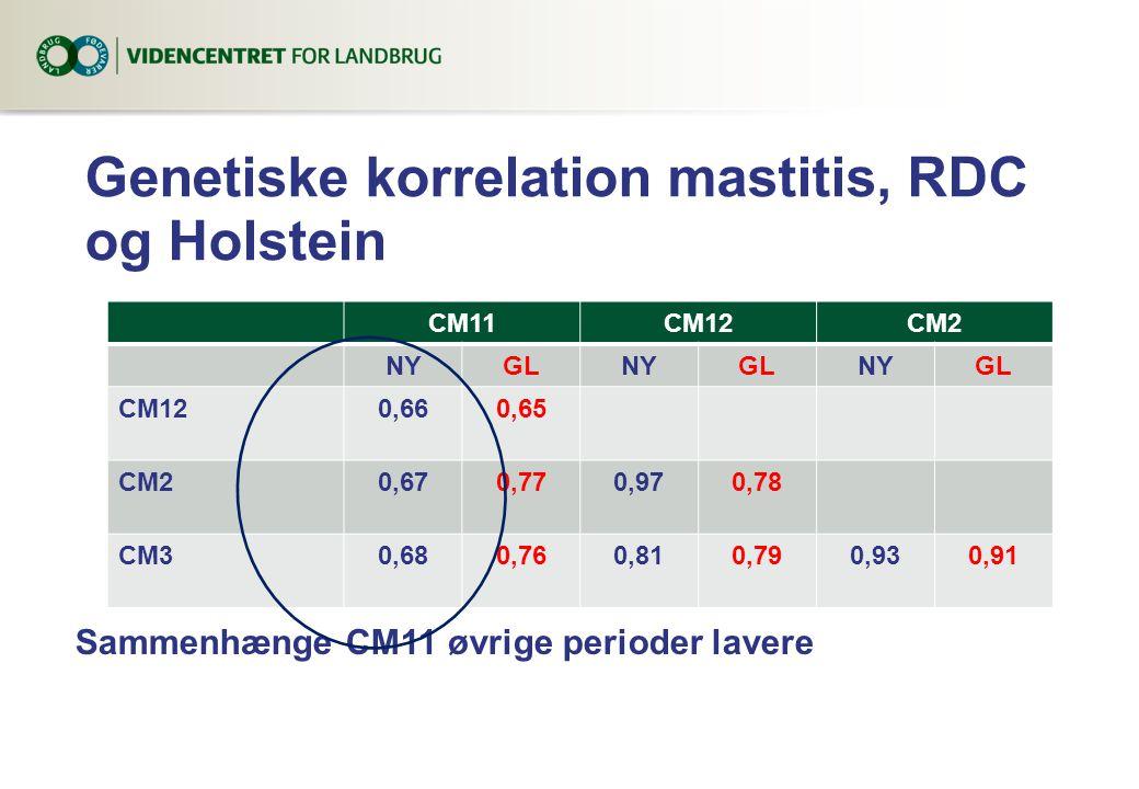 Genetiske korrelation mastitis, RDC og Holstein CM11CM12CM2 NYGLNYGLNYGL CM120,660,65 CM20,670,770,970,78 CM30,680,760,810,790,930,91 Sammenhænge CM11 øvrige perioder lavere