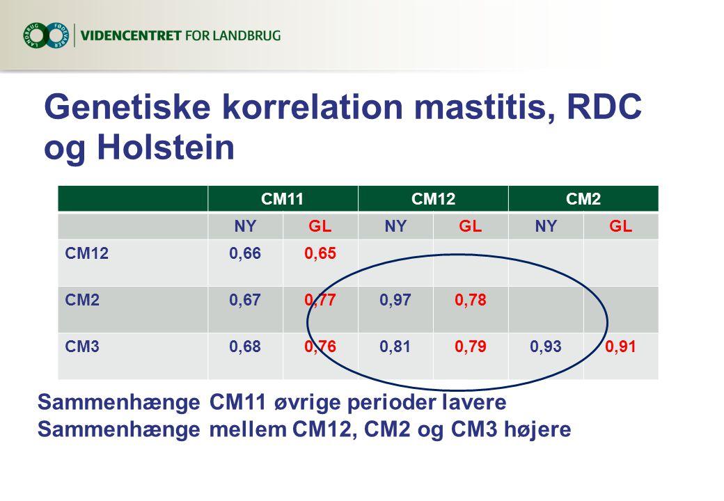 Genetiske korrelation mastitis, RDC og Holstein CM11CM12CM2 NYGLNYGLNYGL CM120,660,65 CM20,670,770,970,78 CM30,680,760,810,790,930,91 Sammenhænge CM11 øvrige perioder lavere Sammenhænge mellem CM12, CM2 og CM3 højere