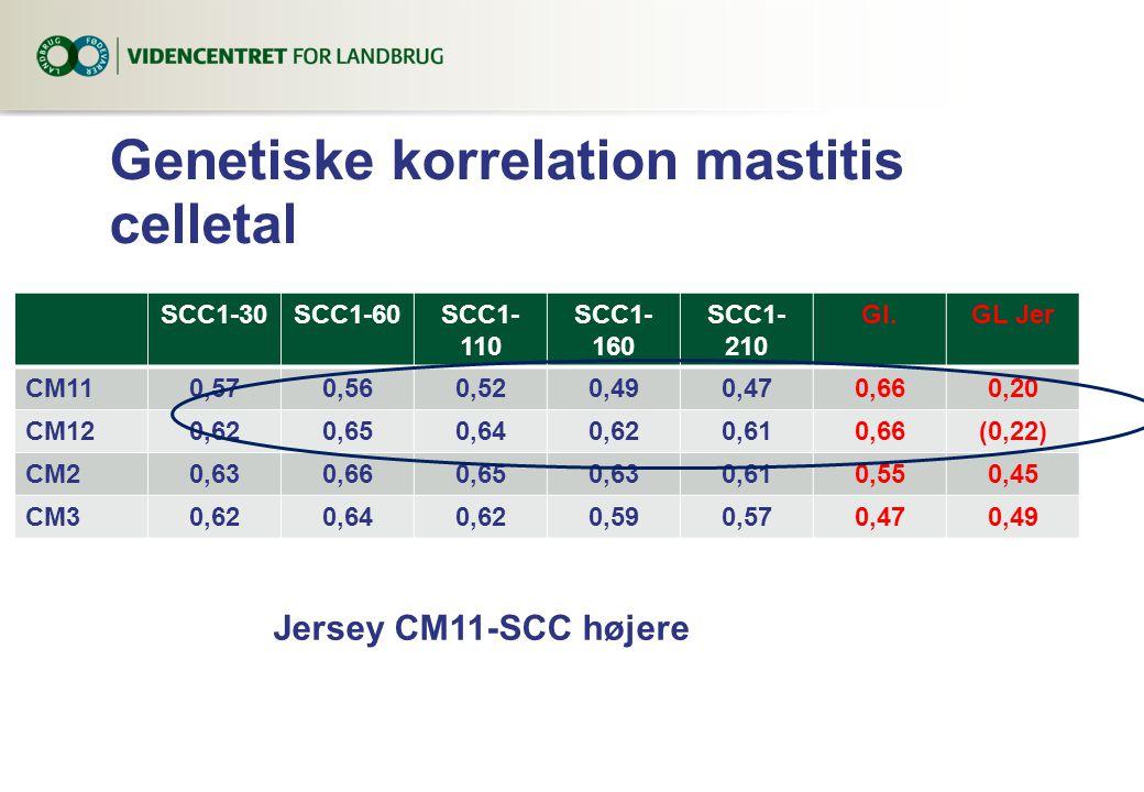 Genetiske korrelation mastitis celletal SCC1-30SCC1-60SCC1- 110 SCC1- 160 SCC1- 210 Gl.GL Jer CM110,570,560,520,490,470,660,20 CM120,620,650,640,620,610,66(0,22) CM20,630,660,650,630,610,550,45 CM30,620,640,620,590,570,470,49 Jersey CM11-SCC højere