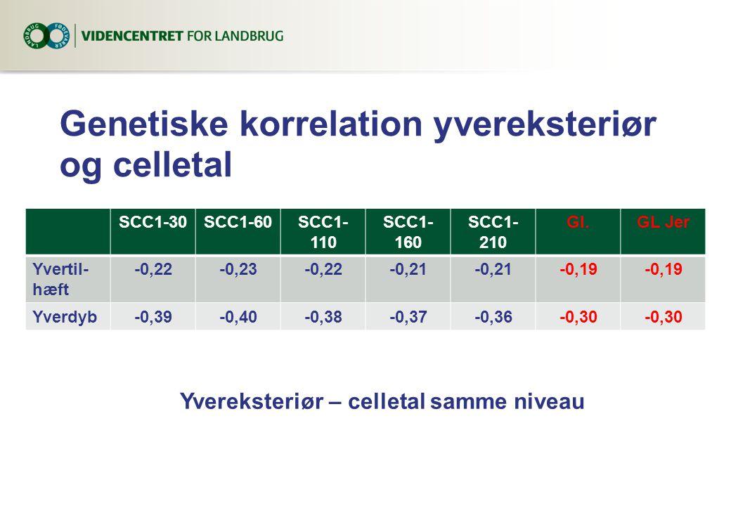 Genetiske korrelation yvereksteriør og celletal SCC1-30SCC1-60SCC1- 110 SCC1- 160 SCC1- 210 Gl.GL Jer Yvertil- hæft -0,22-0,23-0,22-0,21 -0,19 Yverdyb-0,39-0,40-0,38-0,37-0,36-0,30 Yvereksteriør – celletal samme niveau