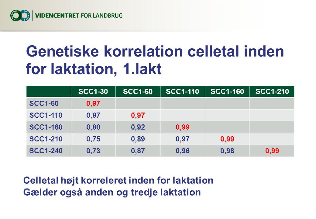 Genetiske korrelation celletal inden for laktation, 1.lakt SCC1-30SCC1-60SCC1-110SCC1-160SCC1-210 SCC1-600,97 SCC1-1100,870,97 SCC1-1600,800,920,99 SCC1-2100,750,890,970,99 SCC1-2400,730,870,960,980,99 Celletal højt korreleret inden for laktation Gælder også anden og tredje laktation