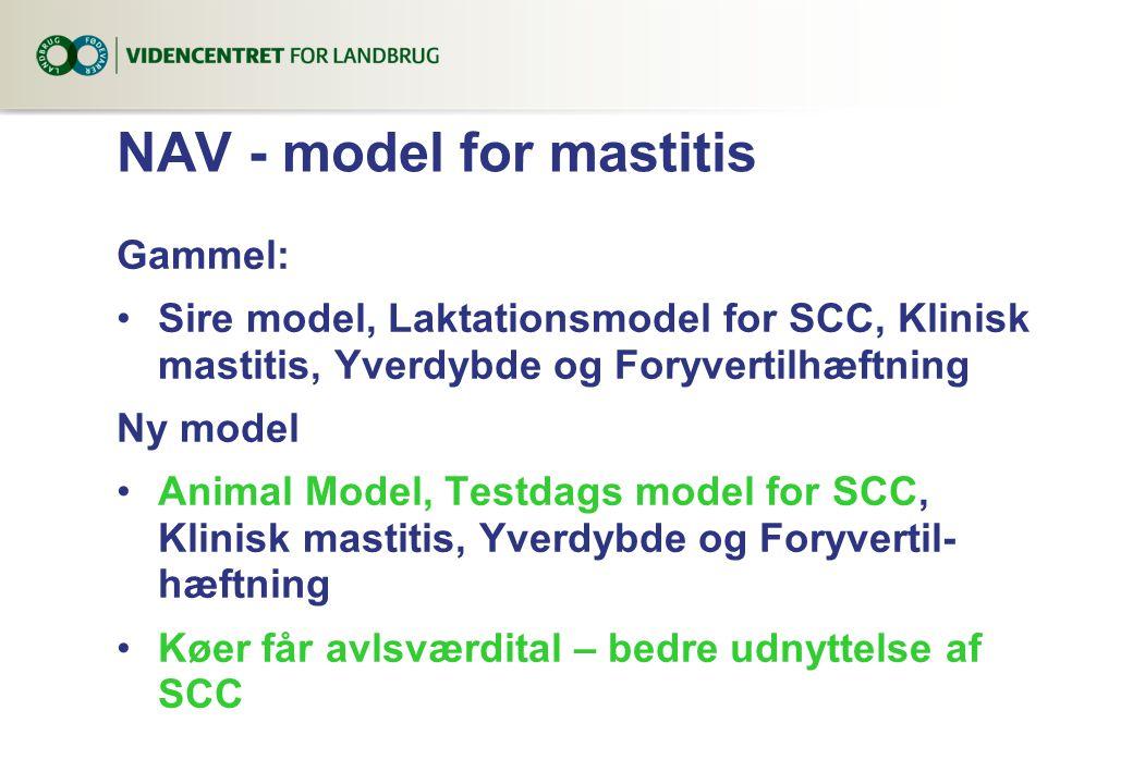NAV - model for mastitis Gammel: Sire model, Laktationsmodel for SCC, Klinisk mastitis, Yverdybde og Foryvertilhæftning Ny model Animal Model, Testdags model for SCC, Klinisk mastitis, Yverdybde og Foryvertil- hæftning Køer får avlsværdital – bedre udnyttelse af SCC