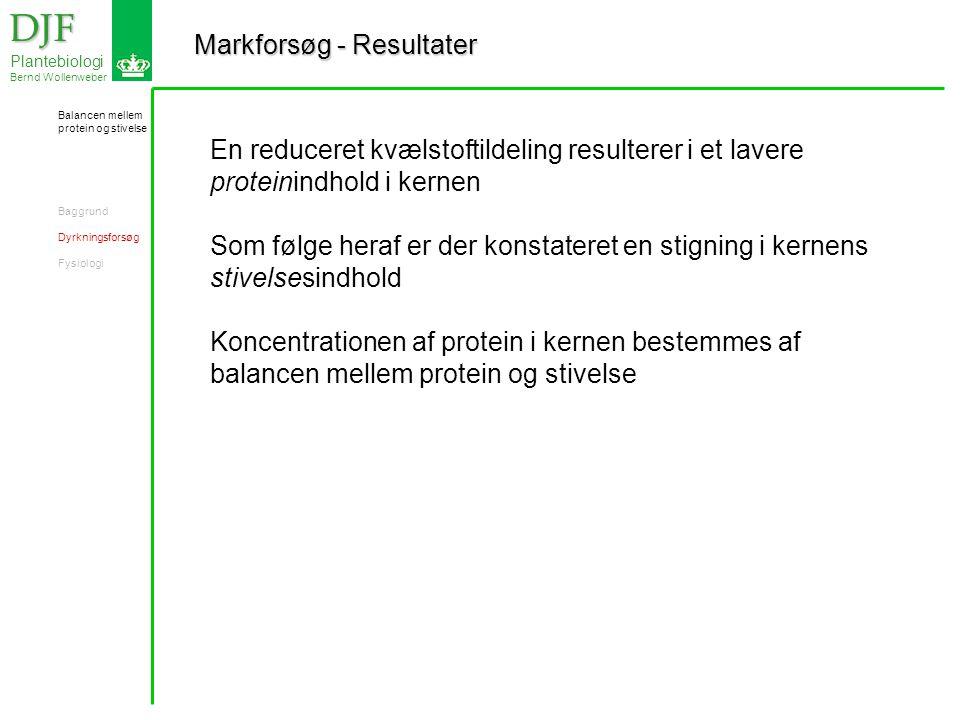 Markforsøg - Resultater DJF DJF Plantebiologi Bernd Wollenweber En reduceret kvælstoftildeling resulterer i et lavere proteinindhold i kernen Som følge heraf er der konstateret en stigning i kernens stivelsesindhold Koncentrationen af protein i kernen bestemmes af balancen mellem protein og stivelse Balancen mellem protein og stivelse Baggrund Dyrkningsforsøg Fysiologi