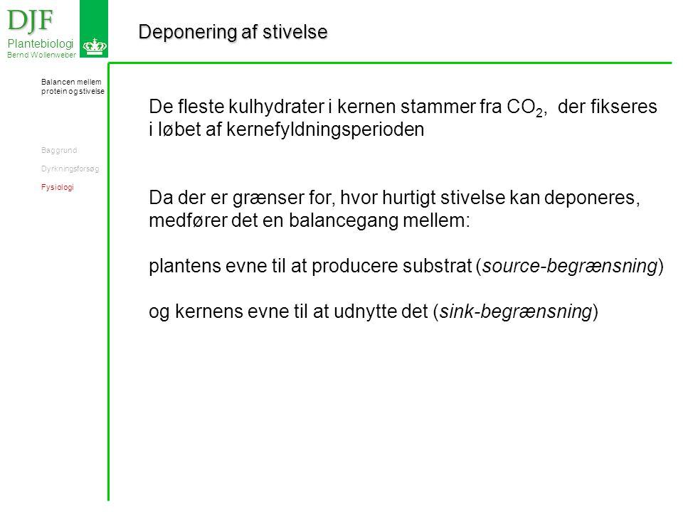 Deponering af stivelse DJF DJF Plantebiologi Bernd Wollenweber De fleste kulhydrater i kernen stammer fra CO 2, der fikseres i løbet af kernefyldningsperioden Da der er grænser for, hvor hurtigt stivelse kan deponeres, medfører det en balancegang mellem: plantens evne til at producere substrat (source-begrænsning) og kernens evne til at udnytte det (sink-begrænsning) Balancen mellem protein og stivelse Baggrund Dyrkningsforsøg Fysiologi