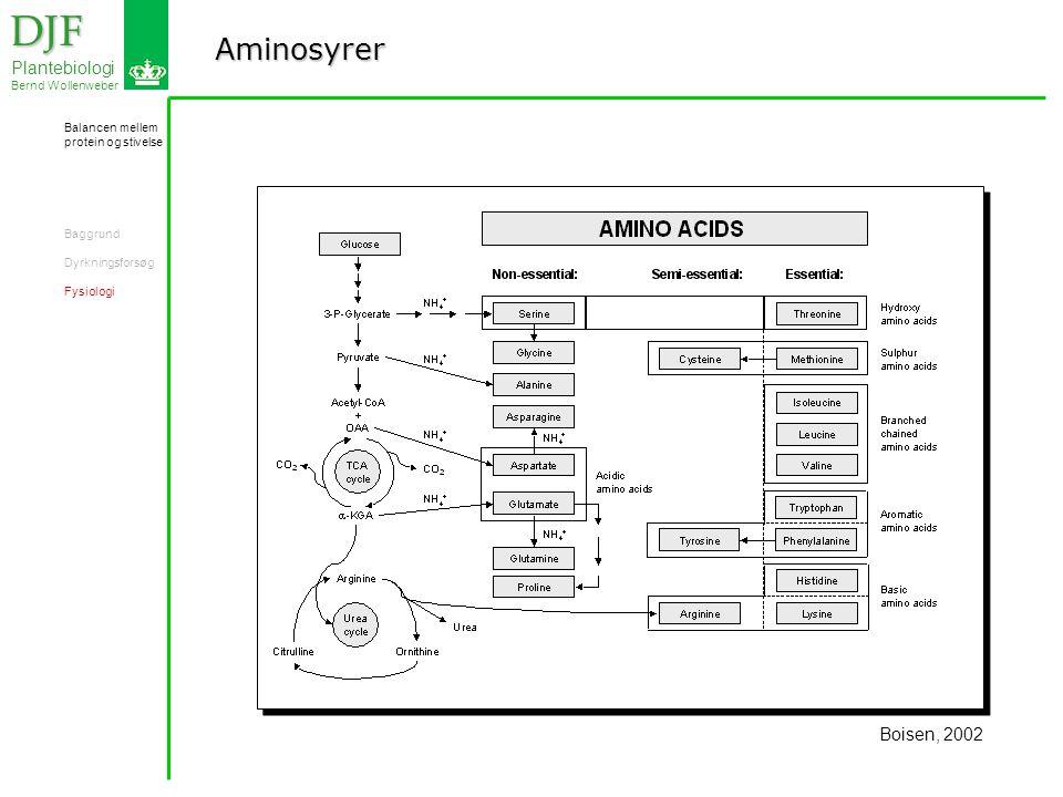 Aminosyrer DJF DJF Plantebiologi Bernd Wollenweber Boisen, 2002 Balancen mellem protein og stivelse Baggrund Dyrkningsforsøg Fysiologi