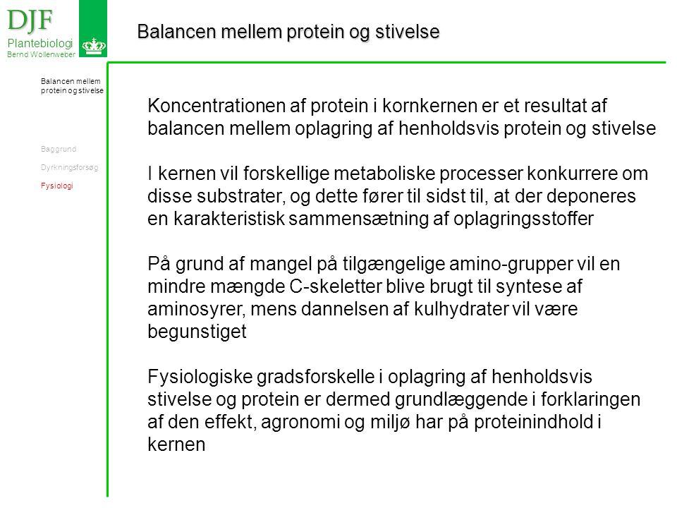 Balancen mellem protein og stivelse DJF DJF Plantebiologi Bernd Wollenweber Koncentrationen af protein i kornkernen er et resultat af balancen mellem oplagring af henholdsvis protein og stivelse I kernen vil forskellige metaboliske processer konkurrere om disse substrater, og dette fører til sidst til, at der deponeres en karakteristisk sammensætning af oplagringsstoffer På grund af mangel på tilgængelige amino-grupper vil en mindre mængde C-skeletter blive brugt til syntese af aminosyrer, mens dannelsen af kulhydrater vil være begunstiget Fysiologiske gradsforskelle i oplagring af henholdsvis stivelse og protein er dermed grundlæggende i forklaringen af den effekt, agronomi og miljø har på proteinindhold i kernen Balancen mellem protein og stivelse Baggrund Dyrkningsforsøg Fysiologi