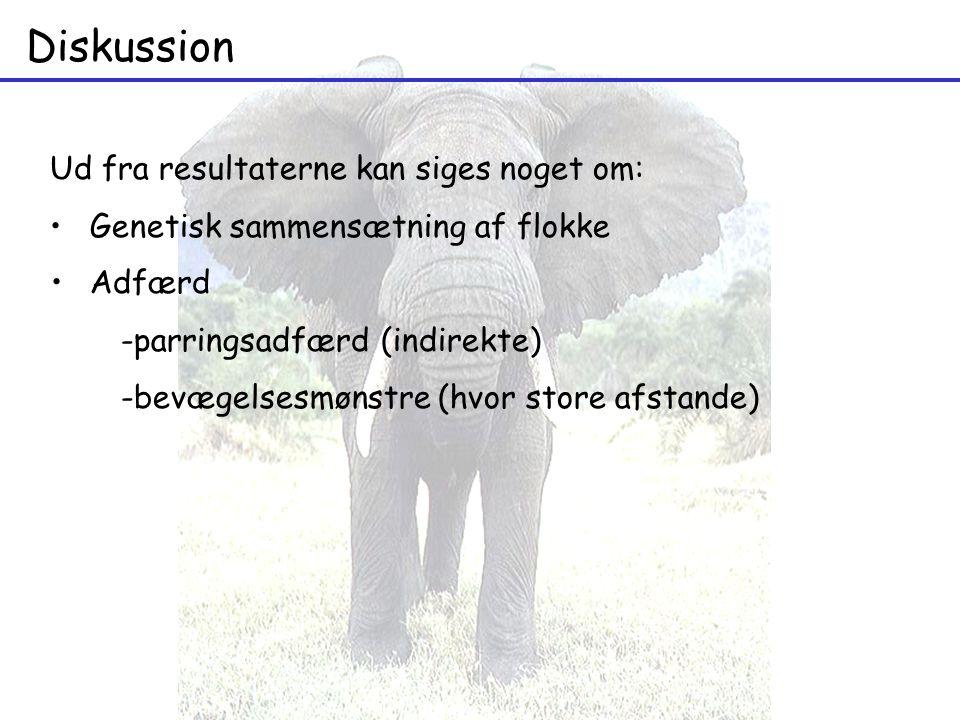 Diskussion Adfærd -parringsadfærd (indirekte) -bevægelsesmønstre (hvor store afstande) Ud fra resultaterne kan siges noget om: Genetisk sammensætning af flokke