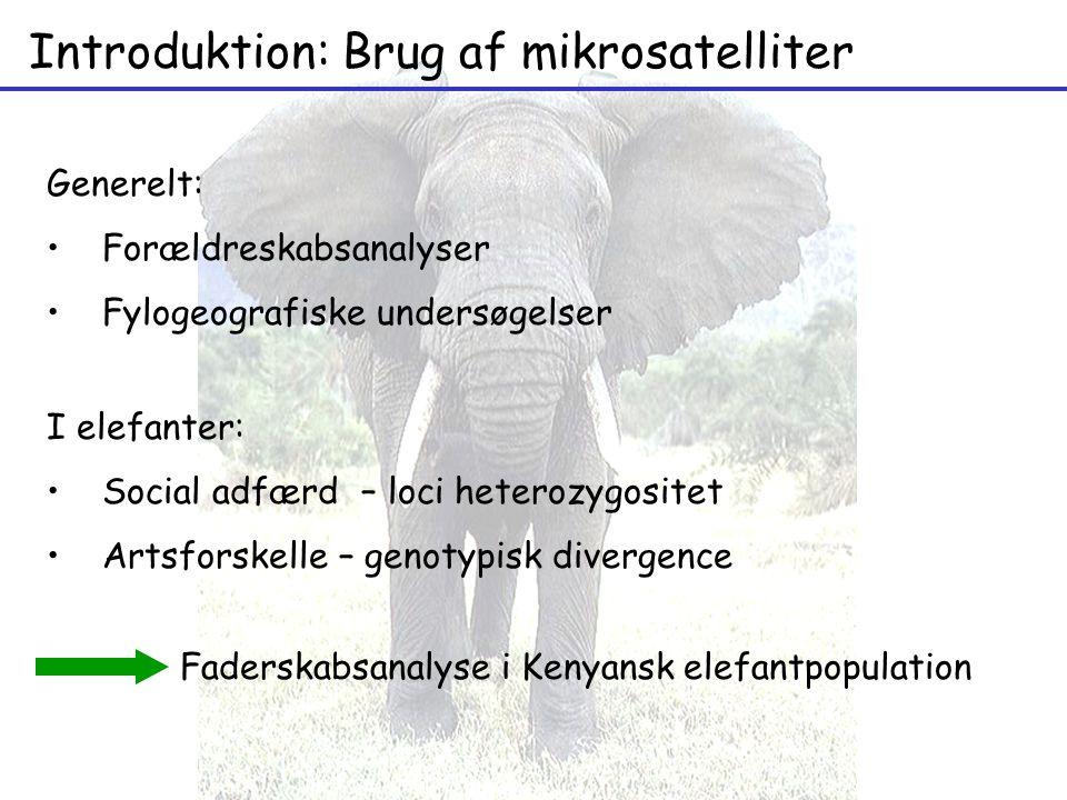 Introduktion: Brug af mikrosatelliter I elefanter: Social adfærd – loci heterozygositet Artsforskelle – genotypisk divergence Generelt: Forældreskabsanalyser Fylogeografiske undersøgelser Faderskabsanalyse i Kenyansk elefantpopulation