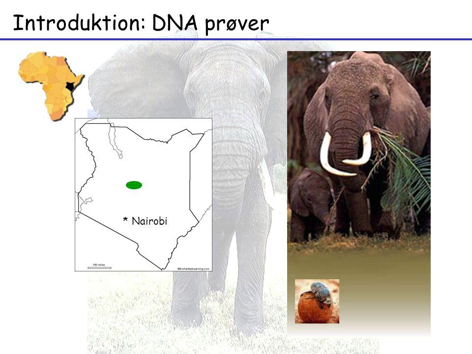 Introduktion: DNA prøver * Nairobi