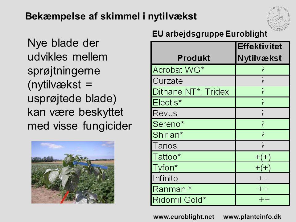 Bekæmpelse af skimmel i nytilvækst Nye blade der udvikles mellem sprøjtningerne (nytilvækst = usprøjtede blade) kan være beskyttet med visse fungicider EU arbejdsgruppe Euroblight www.euroblight.netwww.planteinfo.dk