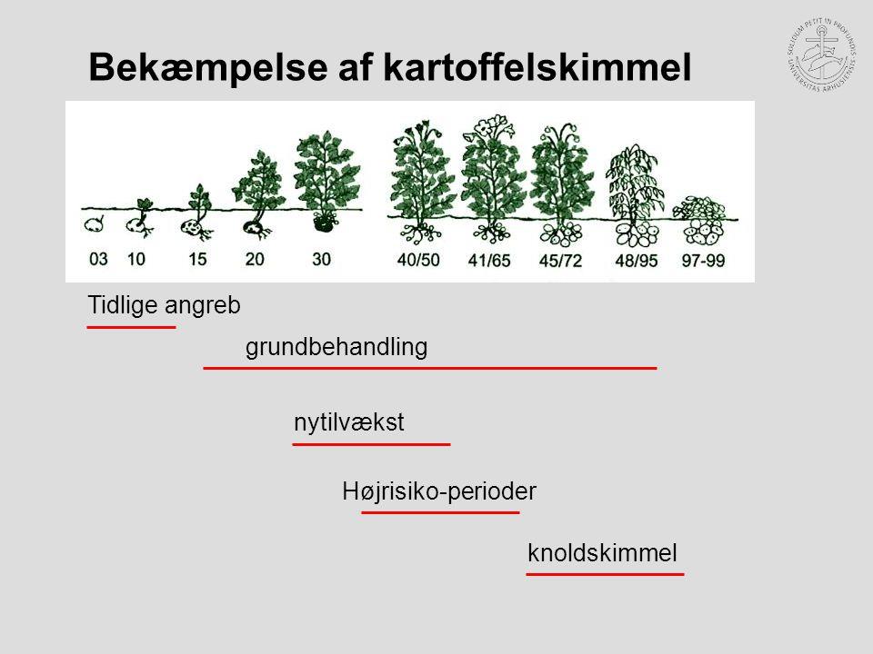 knoldskimmel Højrisiko-perioder nytilvækst grundbehandling Tidlige angreb Bekæmpelse af kartoffelskimmel