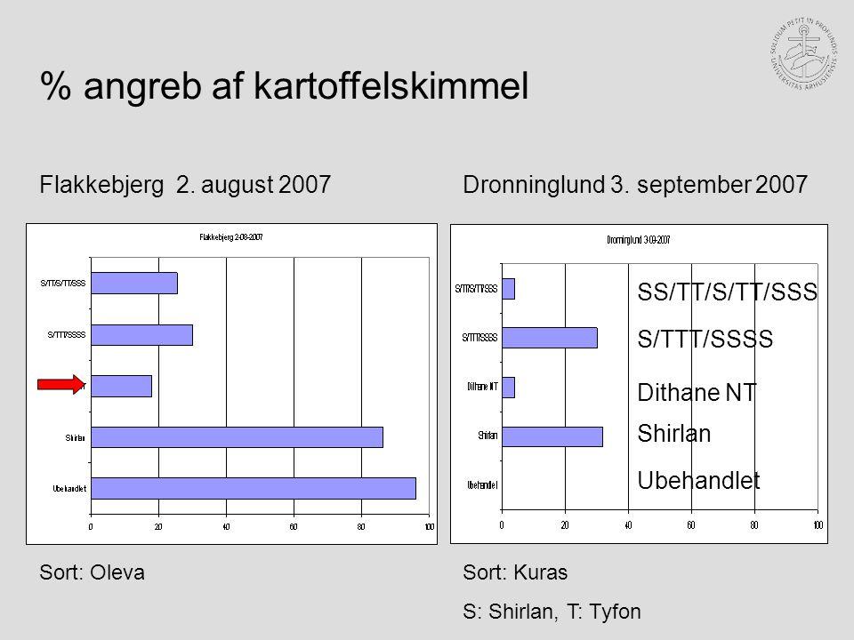 Ubehandlet Shirlan Flakkebjerg 2. august 2007Dronninglund 3.