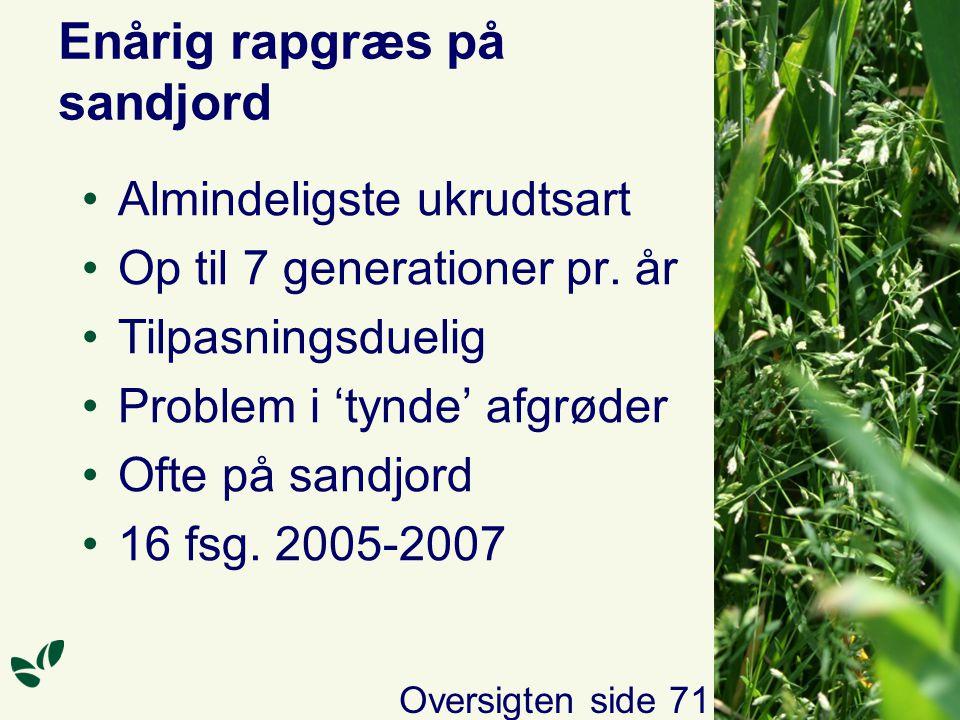 Enårig rapgræs på sandjord Almindeligste ukrudtsart Op til 7 generationer pr.