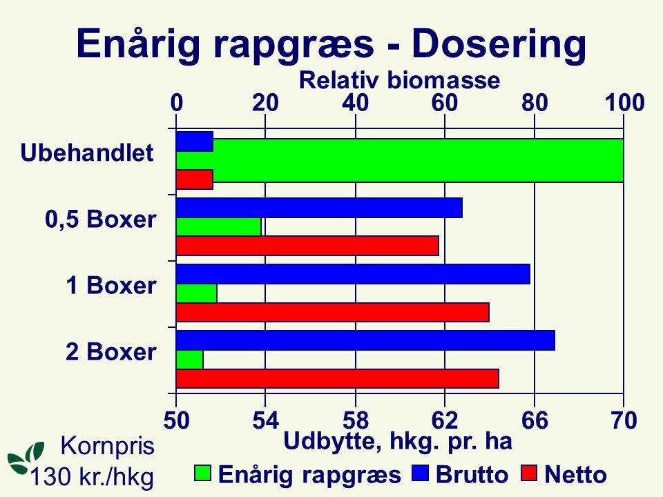 Enårig rapgræs - Dosering Ubehandlet 0,5 Boxer 1 Boxer 2 Boxer 020406080100 Relativ biomasse Enårig rapgræs 505458626670 Udbytte, hkg.
