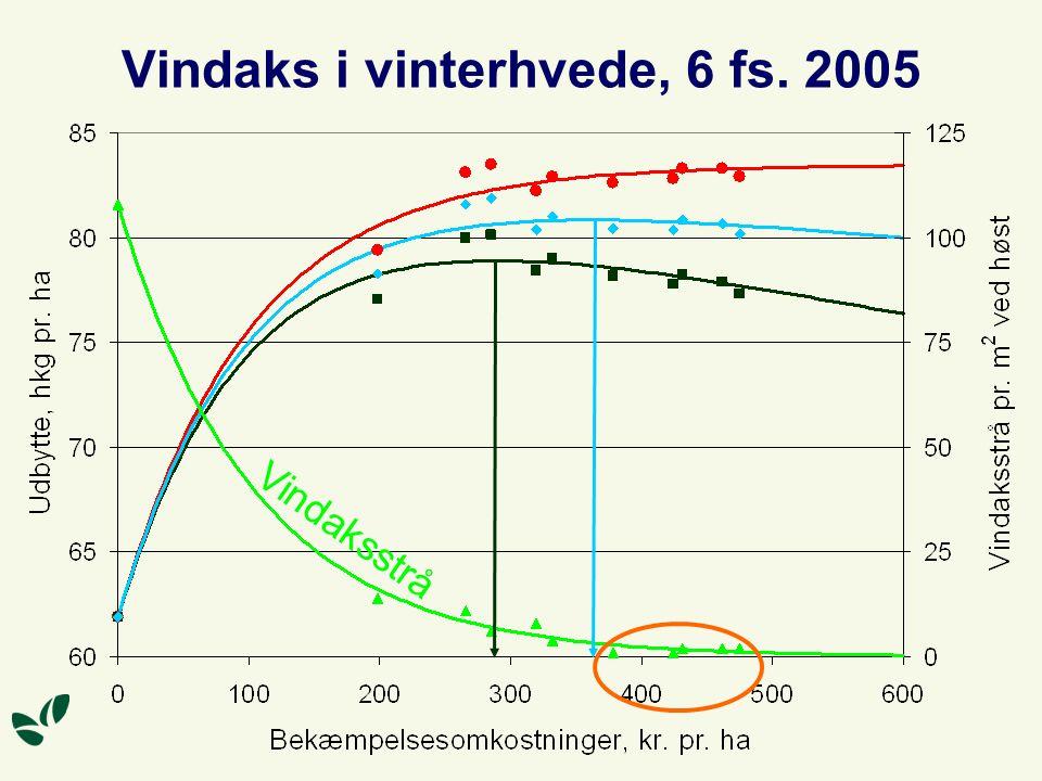 Vindaks i vinterhvede, 6 fs. 2005 Vindaksstrå