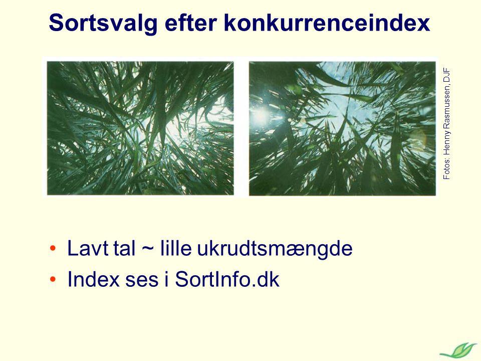 Sortsvalg efter konkurrenceindex Lavt tal ~ lille ukrudtsmængde Index ses i SortInfo.dk Fotos: Henny Rasmussen, DJF